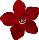 flower_r.png, proroctwo proroctwa